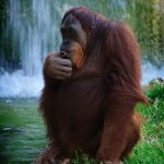 APE: Internet Marketing Criteria for Small Businesses and Startups 3